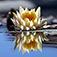 Imagem do aplicativo Photo Reflection -Water Effect