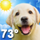Imagem do aplicativo Weather Puppy