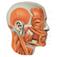 Imagem do aplicativo Human Body Organs