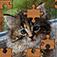 Imagem do aplicativo Quebra-cabeça!