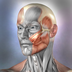 Imagem do aplicativo Muscle & Bone Anatomy 3D