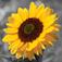 Imagem do aplicativo iSplash Livre - Photo Editor Pic para Color & Filtro de Fotografia Preto e Branco Studio para iPhone e iPod Touch